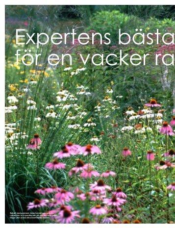 Stadsträdgårdsmästarens tips för en vacker rabatt