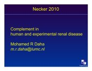 Complement AP : an overview in renal diseases