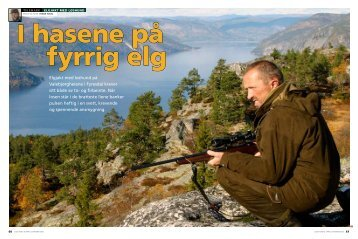 Elgjakt med løshund på Valebjørgheiene i Fyresdal krever sitt både ...