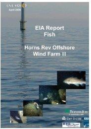 EIA report: fish