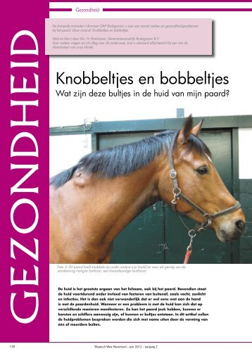 Foto - paarden - DAP Bodegraven