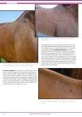 Foto - paarden - DAP Bodegraven - Page 3