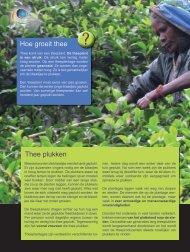 2 de mooie kant van thee, hoe groeit thee.pdf - Zuidactie