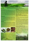 7:Tuinkruiden - Versman - Page 2