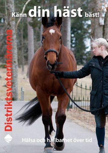 Känn din hästbäst! - Distriktsveterinärerna