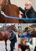 Känn din hästbäst! - Distriktsveterinärerna - Page 5