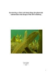 4.2 Marin flora och fauna (PDF 643 kB) - Vattenfall