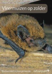 Vleermuizen op zolder - Natuurpunt