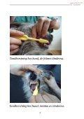 Hundens tänder - Distriktsveterinärerna - Page 7