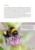 Bijen en hommels in nood - Inagro - Page 5