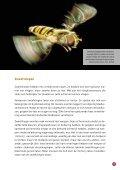 Bijen en hommels in nood - Inagro - Page 7
