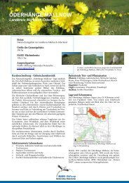 ODERHÄNGE MALLNOW - NABU-Stiftung Nationales Naturerbe