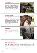 KONFLIKTADFæRD HOS HESTE - Dyrenes Beskyttelse - Page 4