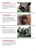 KONFLIKTADFæRD HOS HESTE - Dyrenes Beskyttelse - Page 5
