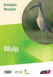 Neerpelt - wulp - Provincie Limburg