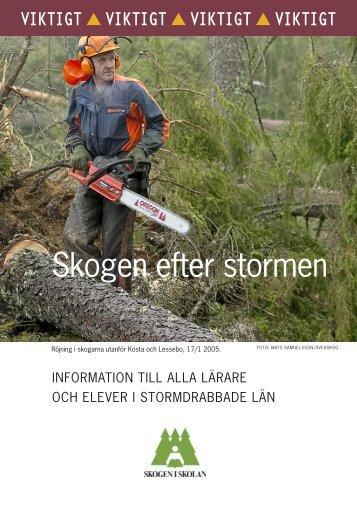 Stormskadad skog - Skogen i Skolan