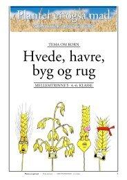 Korn/HVEDE, HAVRE, BYG og RUG (opgaver) - Planter er også mad