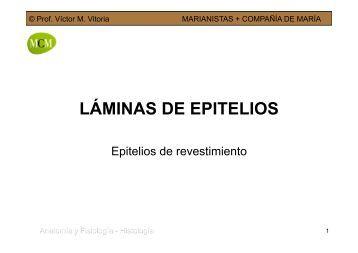 LÁMINAS DE EPITELIOS