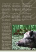 FAKTA: Vildsvin - Verdens Skove - Page 2