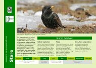 Stare - Sveriges Ornitologiska Förening