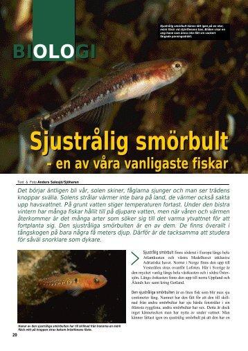 Sjustrålig smörbult Sjustrålig smörbult - Undervattensbilder.se