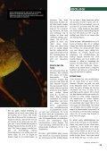 Sjustrålig smörbult Sjustrålig smörbult - Undervattensbilder.se - Page 4