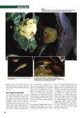 Sjustrålig smörbult Sjustrålig smörbult - Undervattensbilder.se - Page 5