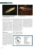 Sjustrålig smörbult Sjustrålig smörbult - Undervattensbilder.se - Page 7