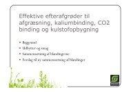 Effektive efterafgrøder til afgræsning, kaliumbinding, CO2 binding og ...