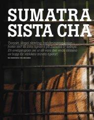 Sumatratigerns sista chans - Johan Augustin