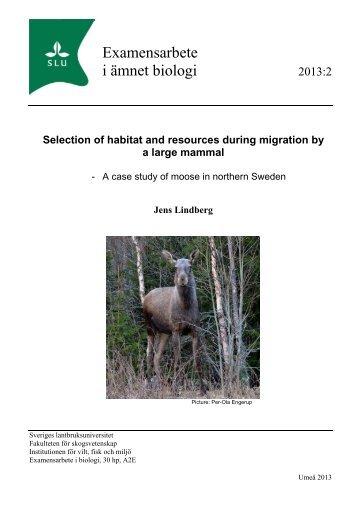 Selection of habitat and resources during migration - Navinder J Singh