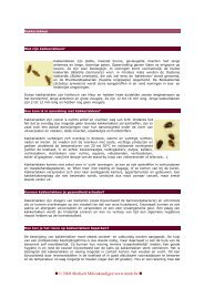 MMK fiche kakkerlakken - Medisch Milieukundigen