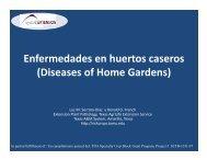 Enfermedades en huertos caseros - Texas A&M AgriLife Research ...