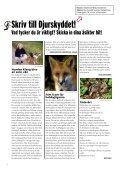 Så hjälper du de vilda djuren i vinter Vargjakten fortsätter De vill ... - Page 4
