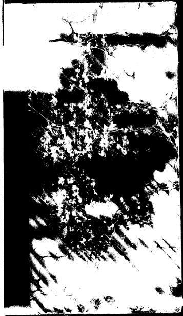 dpo_1101.pdf