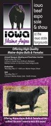 Offering high quality maine-anjou bulls & females - Iowa Maine ...