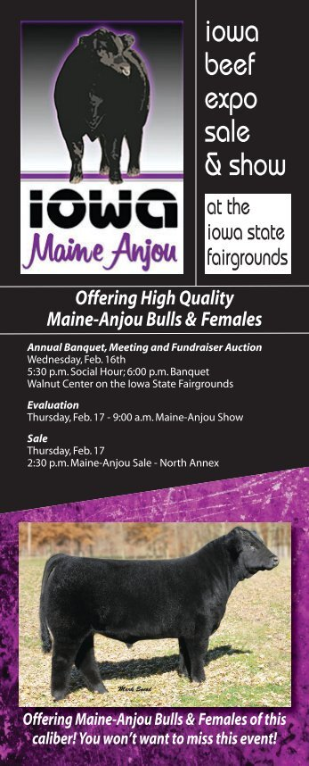 Offering high quality maine-anjou bulls & females - Iowa Maine ...