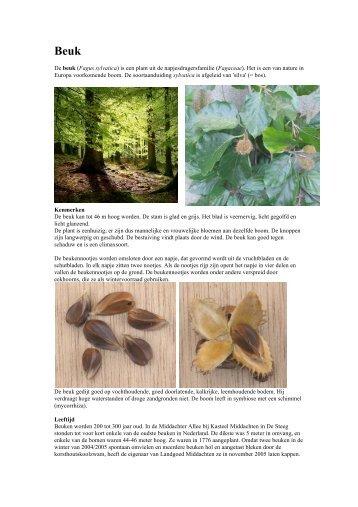 De beuk (Fagus sylvatica) is een plant uit de napjesdragersfamilie ...