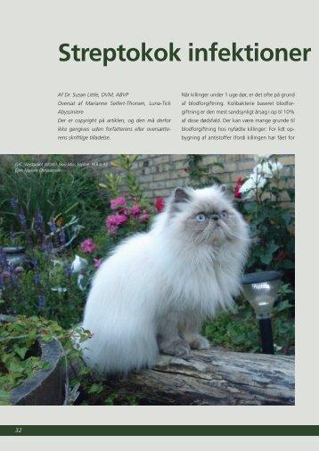 Streptokok infektioner hos killinge - Felis Danica
