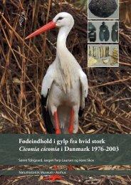 Fødeindhold i gylp fra hvid stork Ciconia ciconia i Danmark 1976-2003