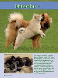 Eurasier – - Schweizer Hunde Magazin