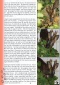 nummer 2 - VOC Geraardsbergen Lierde - Page 6