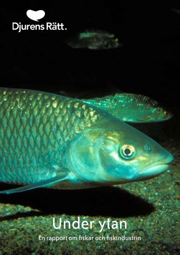 Under ytan – En rapport om fiskar och fiskindustrin - Djurens Rätt