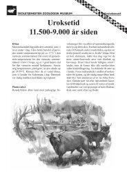 Uroksetid 11.500-9.000 år siden - Skoletjenesten