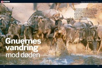 Gnuernes vandring mod døden - Øjvind Kyrø