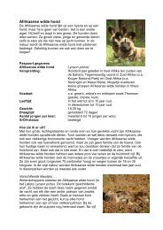 Afrikaanse wilde hond - NVD Dierentuinen