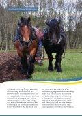 Inhemska hästraser - iFokus - Page 3