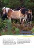 Inhemska hästraser - iFokus - Page 5