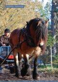 Inhemska hästraser - iFokus - Page 7