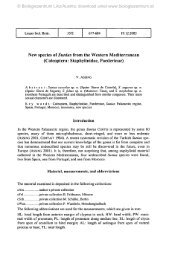 New species of Sunius from the Western Mediterranean (Coleoptera ...